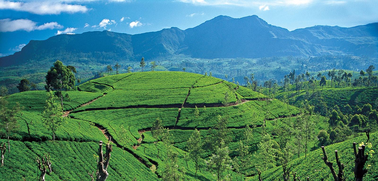 Sri Lanka tea hills
