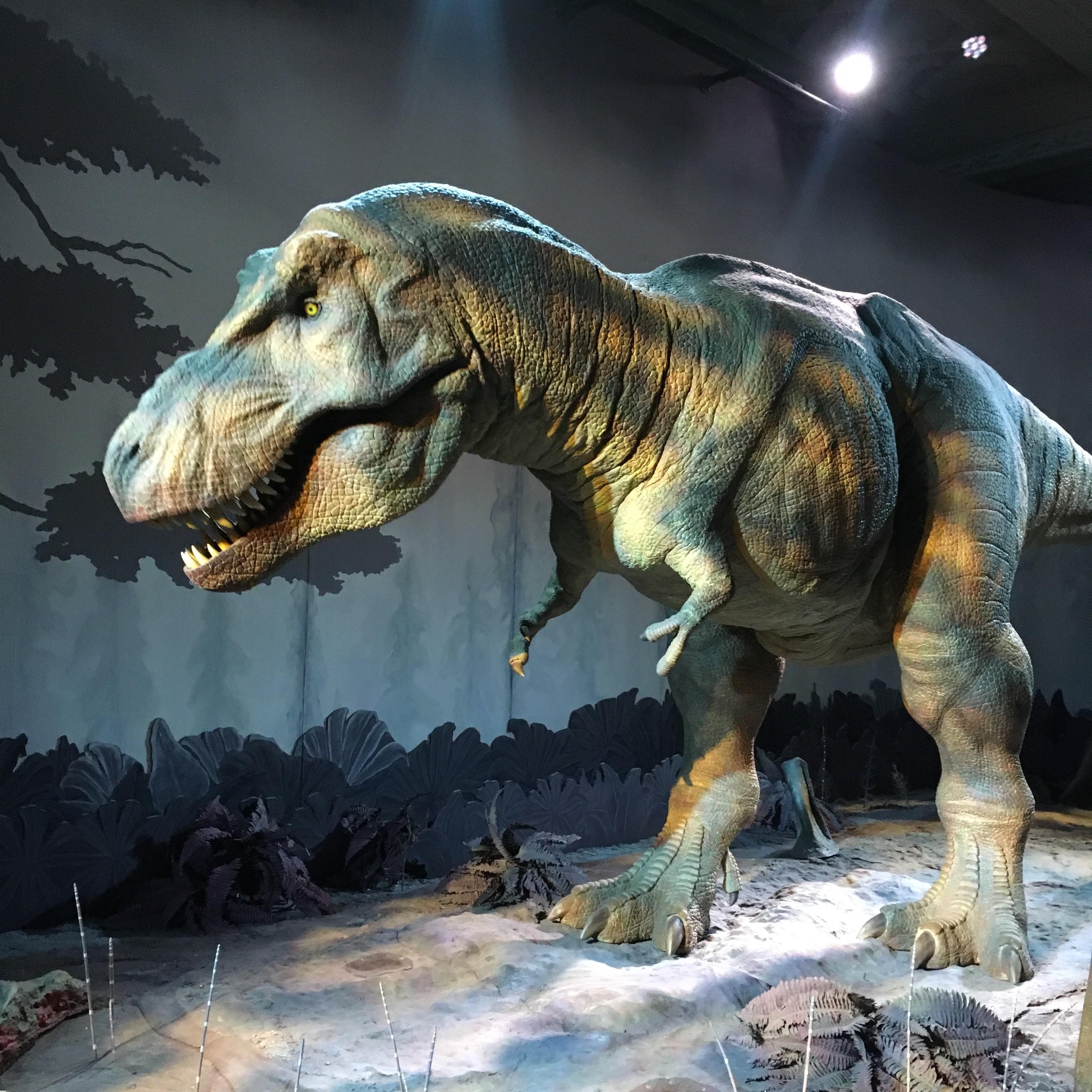 Real Dinosaurs T Rex T Rex Dinosaur Real | ...