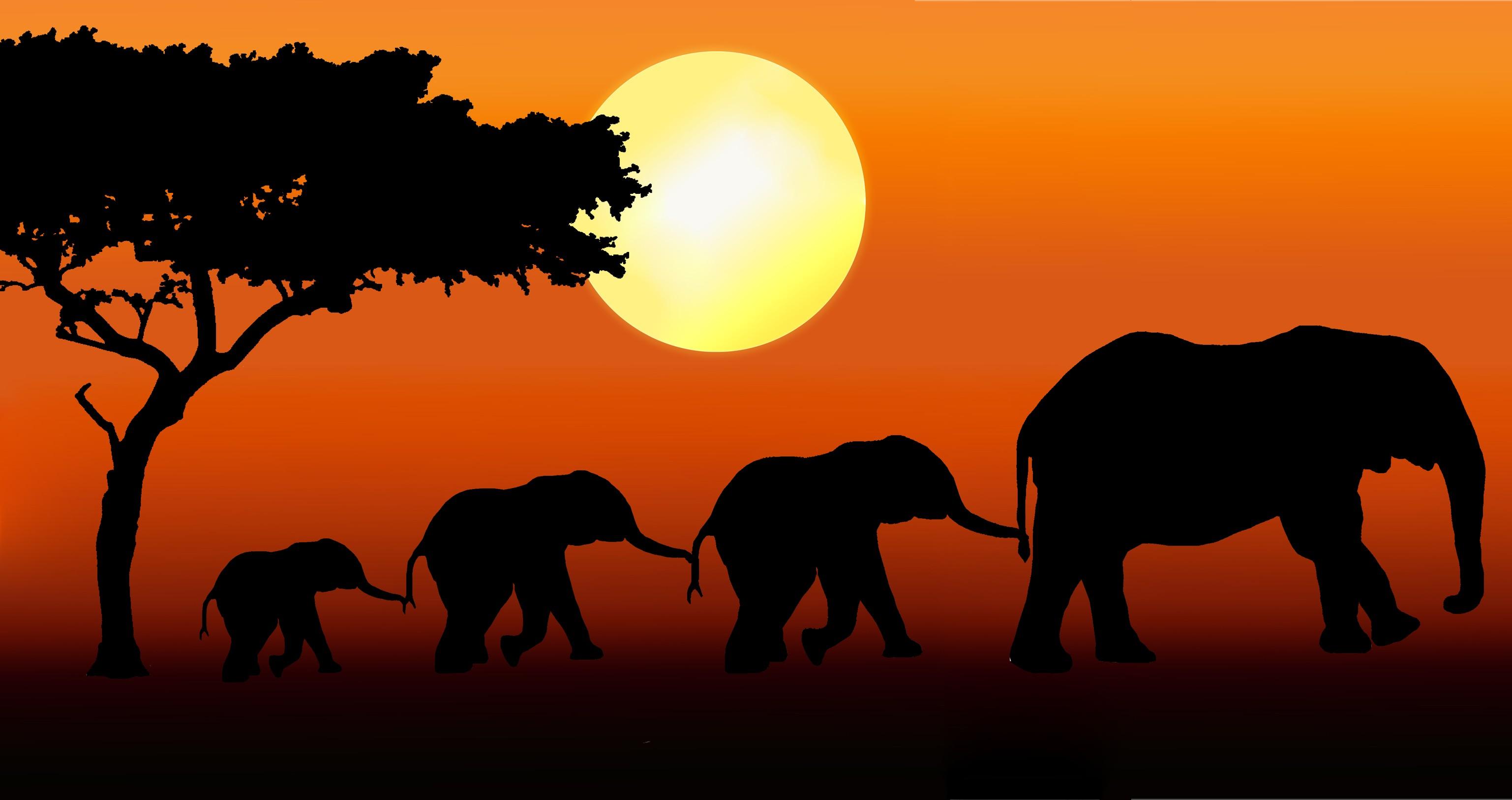 copy-of-elephant-family-walking
