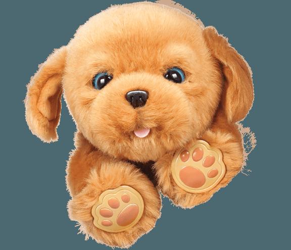 28185_LLP_Puppy_0