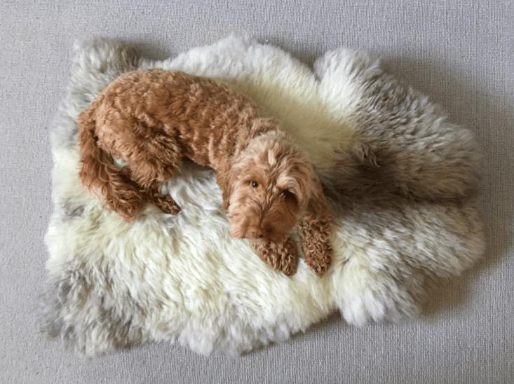 wool & woof